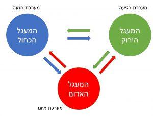 מודל המעגלים של CFT
